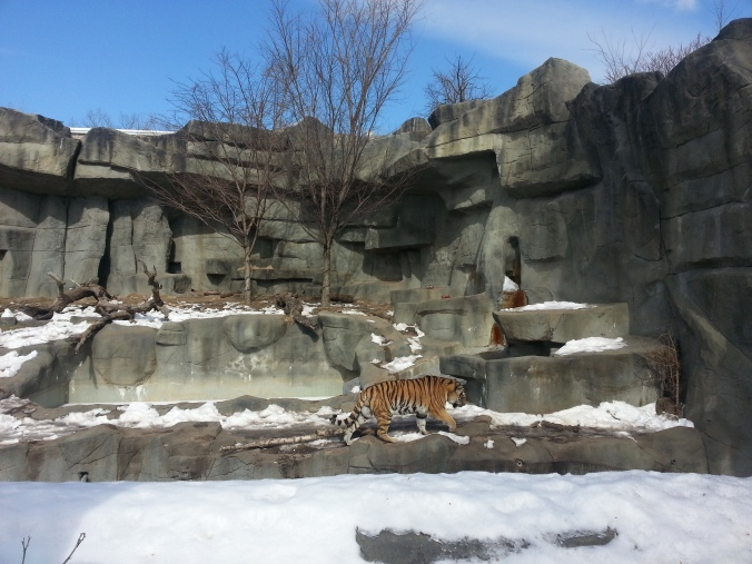 Brookfield zoo, Tiger, free zoo days