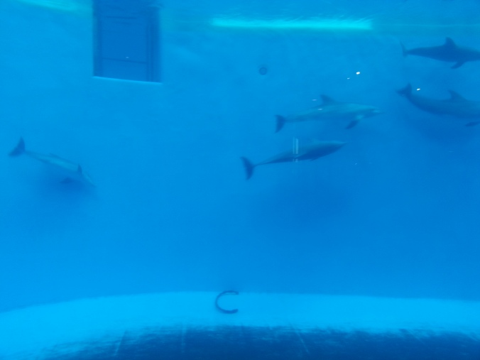 Brookfield zoo, dolphin, free zoo days